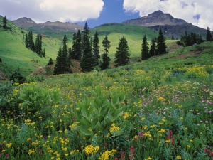 alpine-meadow